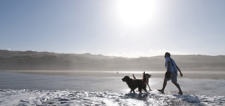 Dog Friendly Holidays In Cornwall